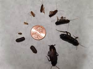 what to do when you see baby roaches find out here