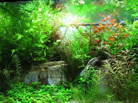 live aquarium plants for sale best prices in ottawa gloucester ottawa