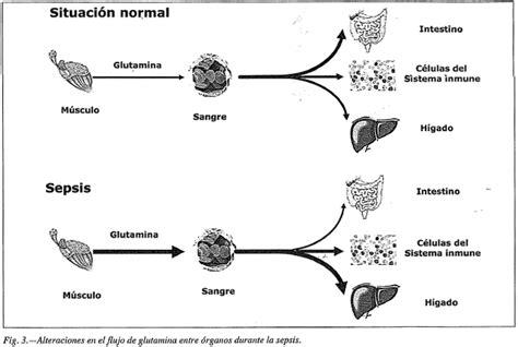 cadenas musculares scielo los secretos de la l glutamina aminostar