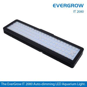 evergrow led grow lights china evergrow led aquarium lights it2080 china