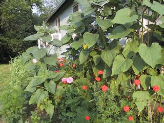 Garden Ridge Flowers Blue Ridge Altered