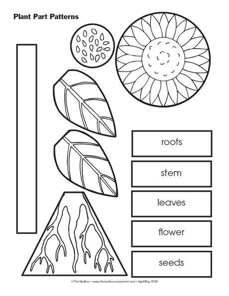 kindergarten pattern activities interactive this resource could be incorporated into a plant unit in