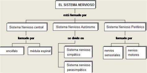 mapa conceptual del sistema nervioso cuentos de don coco mapa conceptual del sistema nervioso
