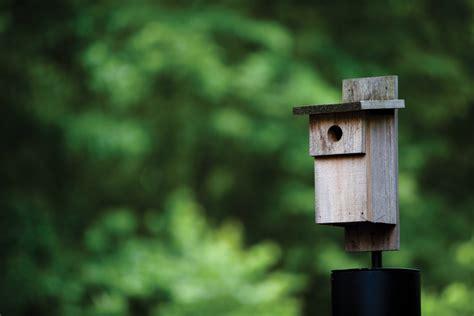 birdhouse plans guide patterns