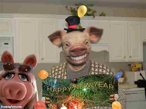 new year pig facts pig family on new years pictures