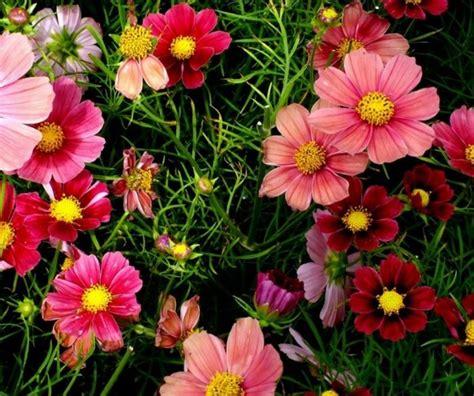 foto dei fiori fiori immagini e foto da condividere sapevatelo