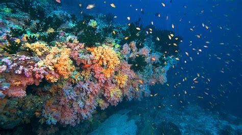 maldives dive maldives diving diving maldives scuba diving maldives
