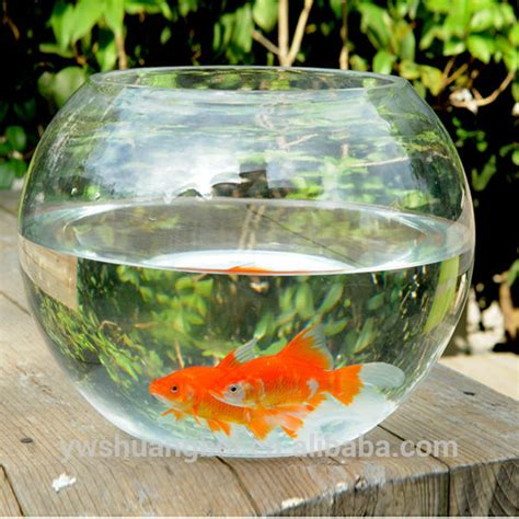 design vis aquarium wholesale cheap beautiful round borosilicate glass fish