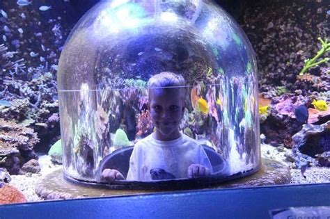 butterfly house sioux falls pop up dome aquarium picture of butterfly house aquarium sioux falls tripadvisor