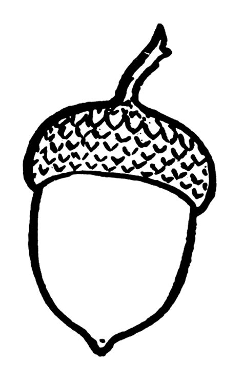 Acorn Drawing Outline spray paint acorn silhouette living well on the cheap