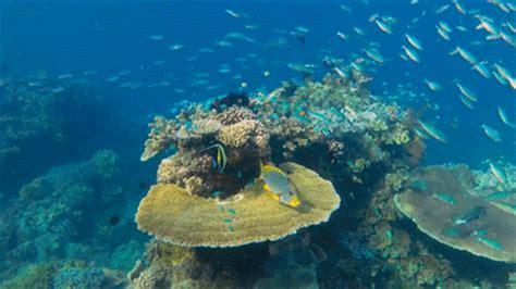 underwater wallpaper gif pin animals underwater sea ocean fish wallpaper wallpapers
