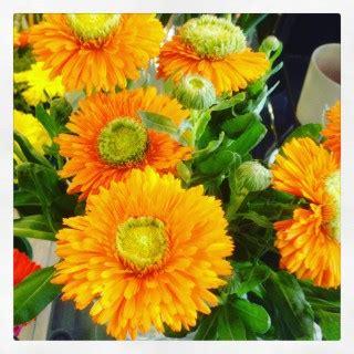 fiori con la lettera e l alfabeto dei fiori la lettera c
