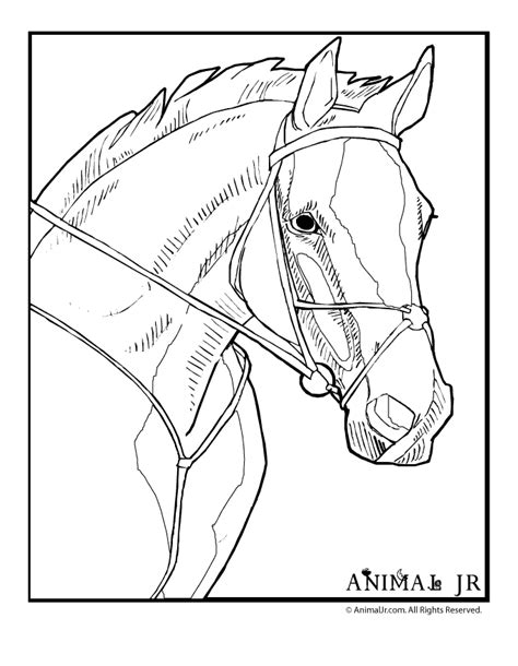 printable coloring pages of realistic horses realistic coloring pages coloring home