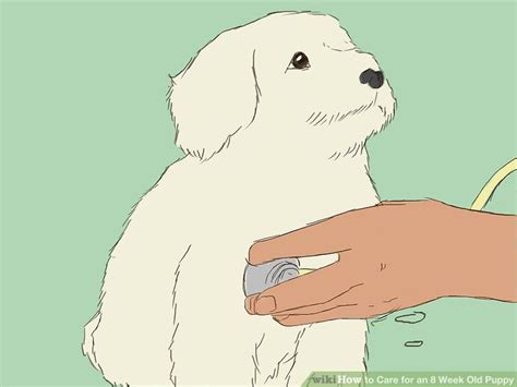 how to care for a 4 week puppy how to care for an 8 week puppy with pictures wikihow