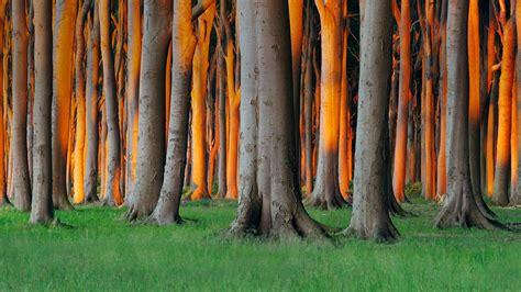 Nienhagen Wood Alemanha | nienhagen wood in mecklenburg vorpommern germany