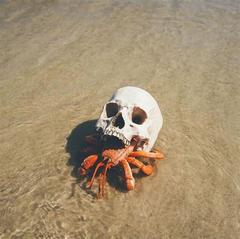 Hermit Crab Heat L by Hermit Crab Using A Skull For A Shell Pics