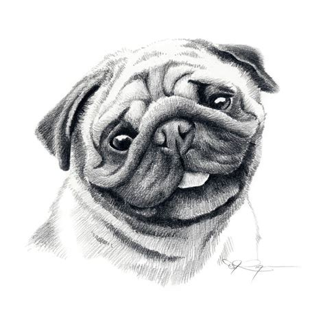 pug sketch image gallery pug drawings