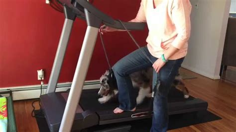 how to to walk on treadmill how to your to walk on a treadmill lover network