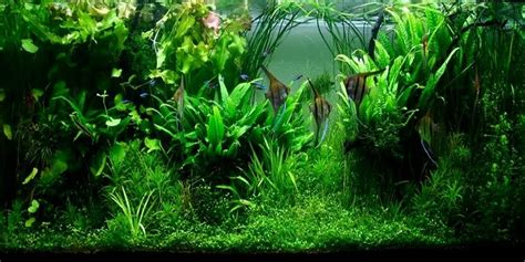 cara membuat aquascape yang indah cara membuat aquascape sederhana yang mudah dan murah