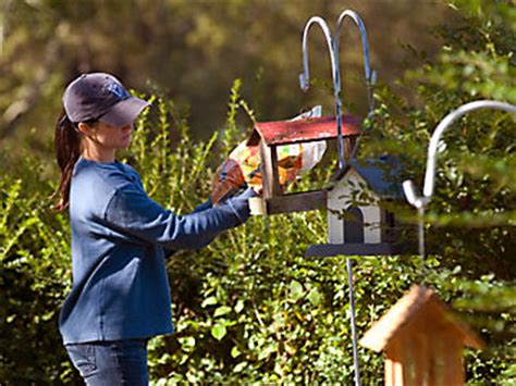 feeding finches backyard bird watching tips on creating a bird habitat wild birds