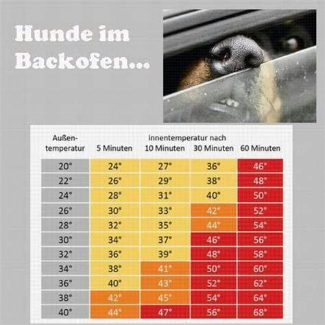 Hund Im Auto Hitze by Hund Im Auto Information Hitze Tabelle