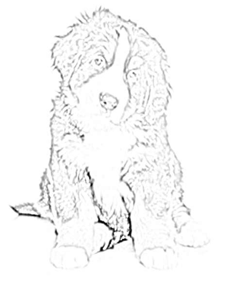 mountain dog coloring page coloring pages of a bernese mountain dog coloring pages