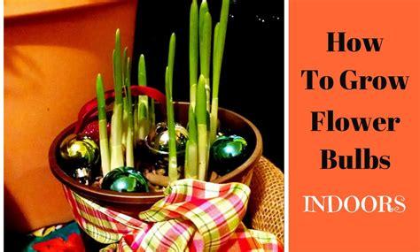 how to grow bulbs indoors