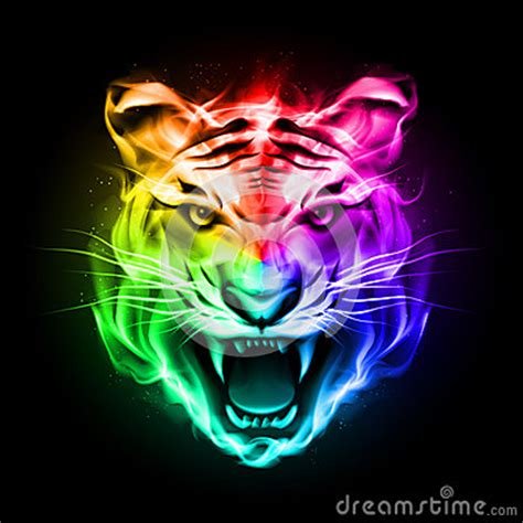 head  tiger  colorful fire stock photography image