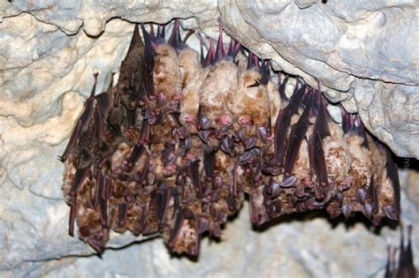best 28 do bats migrate south in the winter