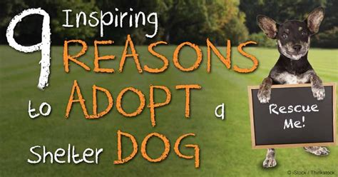 Blood Considers Adoption 2 by 17 Best Images About Adopt Shelter Or Rescue On