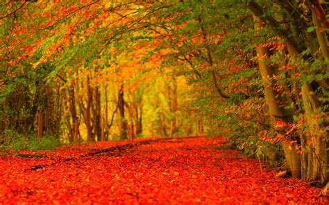 wallpaper hd desktop autumn autumn hd wallpapers wallpaper cave