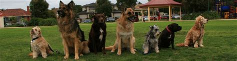 obedience school bayside companion school a well trained is a happy