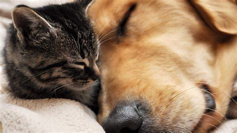 cats and dogs cat and best friends hd wallpaper 187 fullhdwpp hd wallpapers 1920x1080