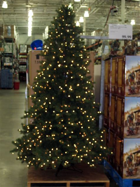 costco xmas trees big ep at costco