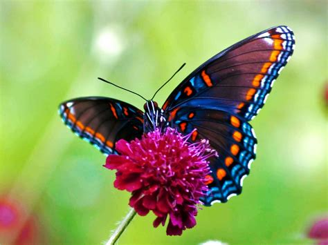 Wallpaper Free Butterfly | waspwednesday butterfly wallpapers