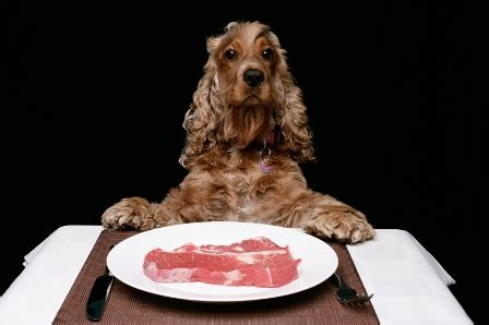 can dogs eat steak food for dogs choosing the right food for dogs