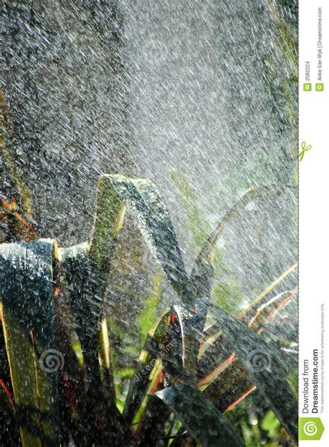 imagenes de fuertes lluvias lluvia tropical del verano imagenes de archivo imagen