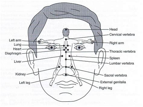 Master Tung Detox by 41 Best Master Tung S Acupuncture Images On