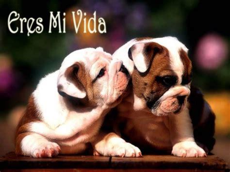 imagenes de animales enamorados im 225 genes tiernas de perritos enamorados