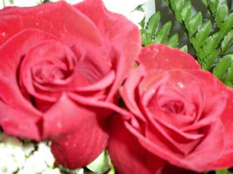 imagenes de flores preciosas fotos preciosas top 25 ideas about flores preciosas on
