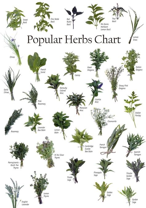 Herbs For Garden by 25 Best Ideas About Culinary Herb On Herbs