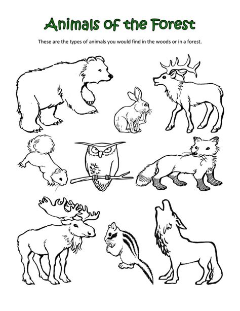 coloring pages of animals in their habitats 7 best images of animal habitats coloring printables