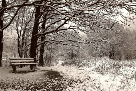 bench winter wallpaper winter bench snow tree park desktop