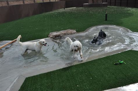 backyard dog pool dog pool pets pinterest