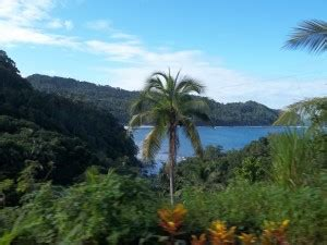 beauty shows east coast photo of the day east coast beauty dominica news online