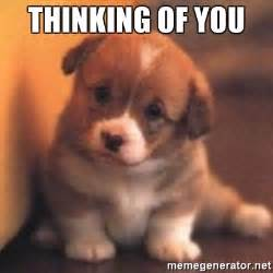 Thinking About You Meme - thinking of you cute puppy meme generator