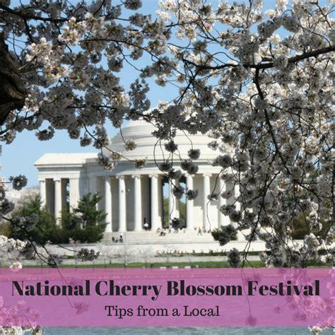 national cherry blossom festival national cherry blossom festival 6 secrets from a local