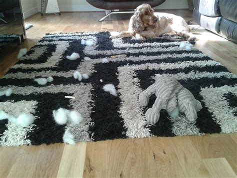 why do dogs like squeaky toys why do dogs destroy toys listener