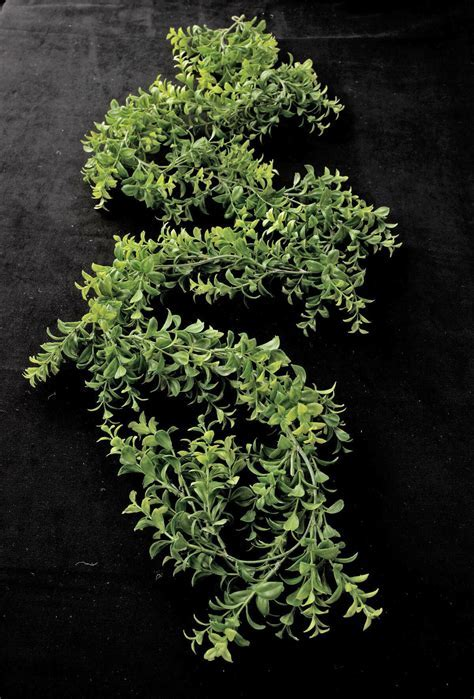 Artificial Japanese Boxwood Garland Green 6ft
