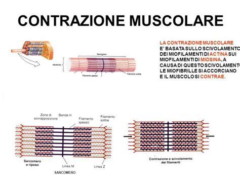 alimentazione per crescita muscolare ottima colazione per guadagnare massa muscolare